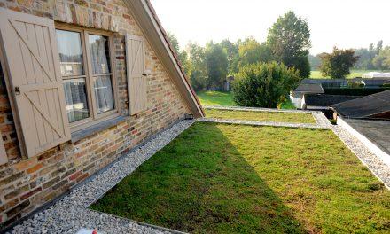 Une toiture verte pour chaque bâtiment